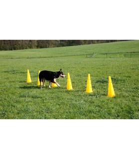 Lot de cônes et barres d'obstacles Agility pour Chien