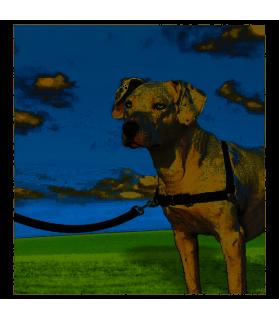 Harnais de dressage Easy Walk® Taille M pour chien